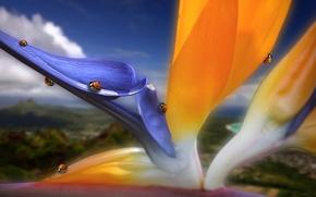 Wallpaper flower, color, petals, bugs