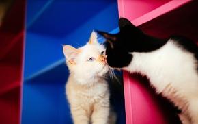 Picture cat, cat, familiarity