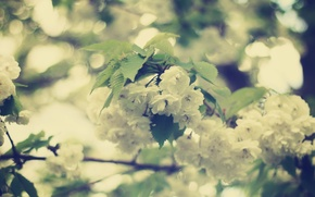 Picture leaves, flowers, branch, tenderness, beauty, spring, blur, white, flowering, bokeh