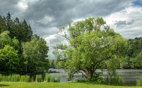 Picture greens, summer, grass, the sun, clouds, trees, river, shore, Germany, Passau