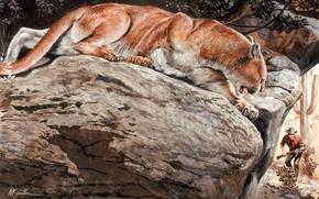 Picture nature, stones, predator, Puma, wild cat, hunter, mountain lion, Cougar, Mort Künstler