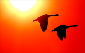 Picture the sun, birds, wings, silhouette, glow