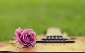 Picture summer, grass, rose, guitar, clearing