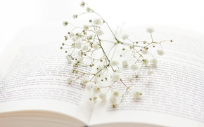 Picture flowers, sprig, branch, book, white