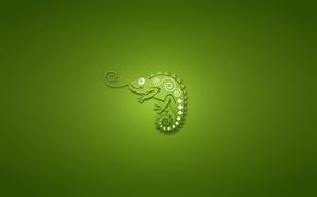 Wallpaper chameleon, minimalism, green background, chameleon
