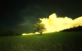 Wallpaper tree, clouds, fresh grass, meadow