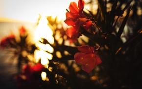 Picture flower, rays, red, sunrise, bokeh, dobraatebe