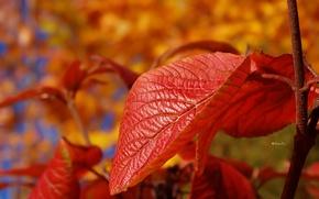 Picture sheet, branch, Autumn, blur