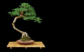 Picture leaves, tree, bonsai, minimalism, pot, stand