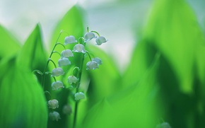 Picture leaves, paint, spring, Lily of the valley, inflorescence