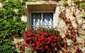 Picture flowers, plants, Window, Italy, flowers, Italia, finestra