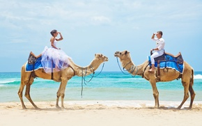 Picture sea, beach, camels, a couple in love