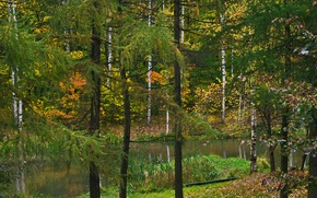 Picture Nature, Autumn, Lake, Trees, Forest, Leaves, Park