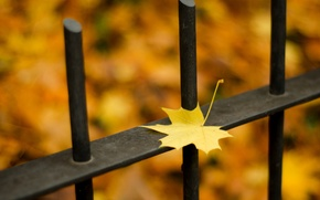 Picture autumn, leaves, macro, nature, the fence, nature, autumn, leaves, fence, season, season, fall
