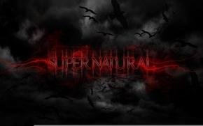Picture birds, background, black, supernatural, supernatural