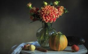 Picture apples, pumpkin, Dahlia