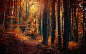 Picture autumn, forest, leaves, trees, nature, yellow, orange, path