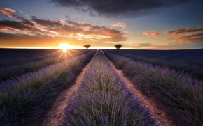 Picture field, sunset, lavender