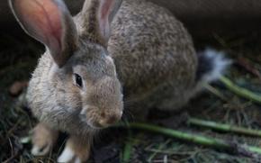 Picture animals, Rabbit, Milota