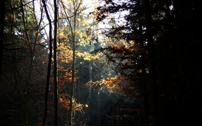 Picture autumn, forest, trees, the rays of the sun