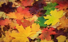 Picture leaves, color, Golden autumn