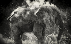 Picture sand, photo, elephant, black and white, to clean