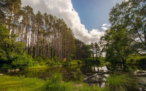 Picture forest, summer, landscape, nature, lake