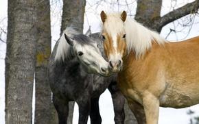 Picture autumn, horse, tenderness, pair