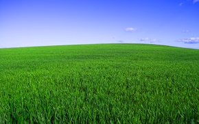 Picture field, the sky, grass, horizon, green