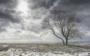 Picture field, snow, clouds, tree