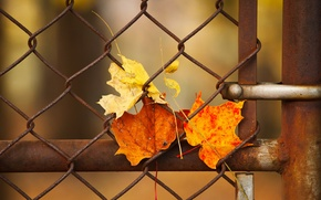 Picture leaves, macro, the fence