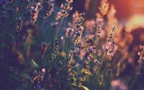 Wallpaper light, flowers, heat, lavender, bokeh