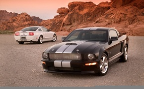 Picture Shelby, mustang, gt500