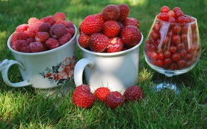 Wallpaper macro, mugs, glass, red, cottage, berries, raspberry, Cup, currants, grass, strawberry