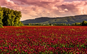 Picture field, house, hill, house, field of flowers, field, hill, field of flowers
