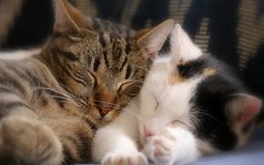 Picture sleep, kittens, a couple, sleeping kittens
