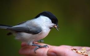 Picture animals, birds, nature