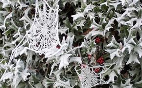 Wallpaper Web, snow, winter