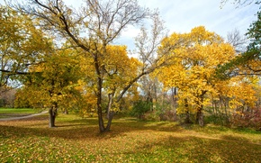 Picture autumn, leaves, trees, Park