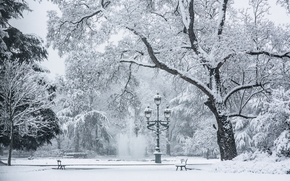 Picture cold, winter, snow, trees, bench, lamp, area, fountain
