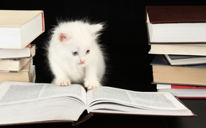 Picture kitty, books, kitten, kitty, book, kitty, white smart cat, white smart cat, books
