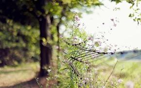 Wallpaper focus, flowers, mesh, nature, day, fence, bokeh, blur, tree, summer