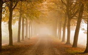 Picture road, trees, autumn, fog, mist, lamp posts