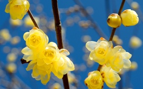 Picture flowers, branches, spring, yellow, flowering