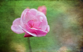 Picture flower, style, background
