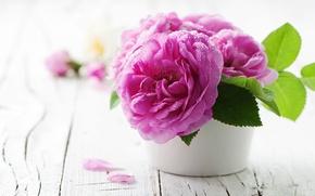 Picture flower, water, drops, flowers, Board, rose, pot