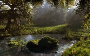 Picture forest, water, nature, pond, stones, foliage, moss, art, pond, klontak