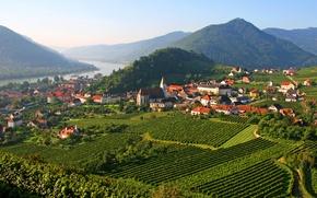 Picture trees, mountains, river, field, home, Austria, plantation, Spitz, Wachau