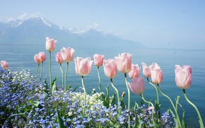 Wallpaper water, flowers, mountains, lake, tenderness, spring, tulips, forget-me-nots, Geneva