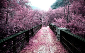 Picture color, bridge, nature, trees, Japan, pink